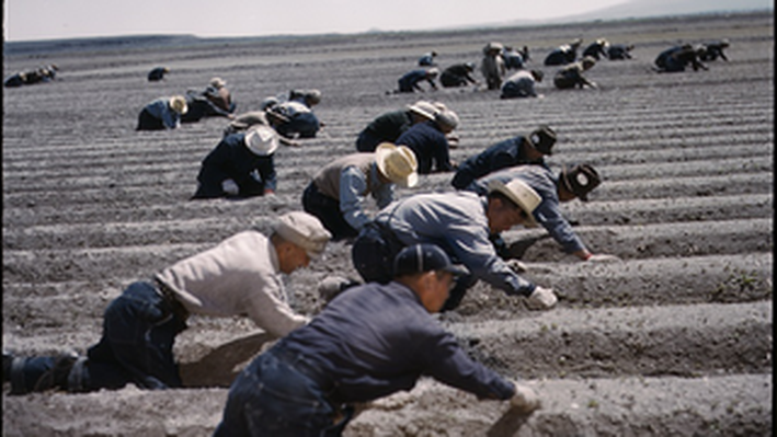Tule Lake Relocation Center: Workers