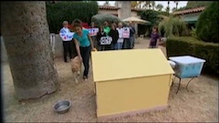 Doghouse Design Video