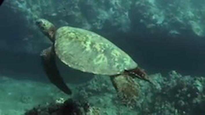 DragonflyTV | Sea Turtles