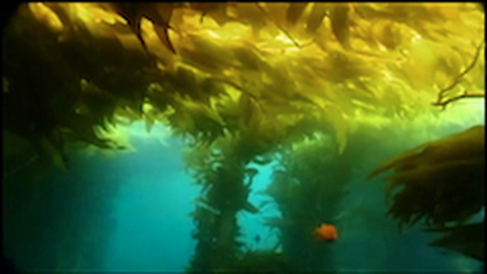 DragonflyTV | Kelp Forest