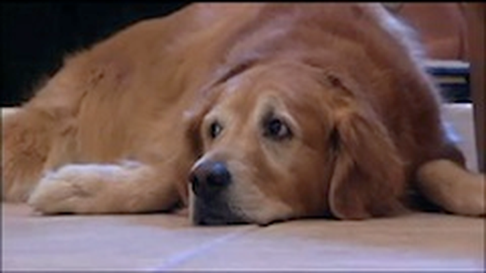 Pet Therapy Video