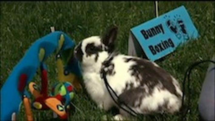 DragonflyTV | Rabbits