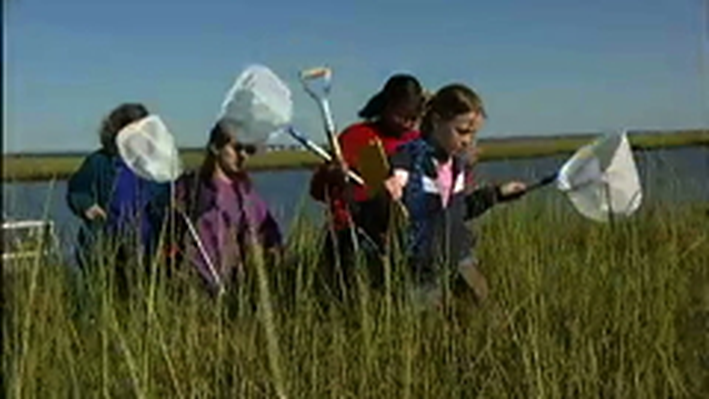 SciGirls en Español Activity: Humedales (Wetlands)