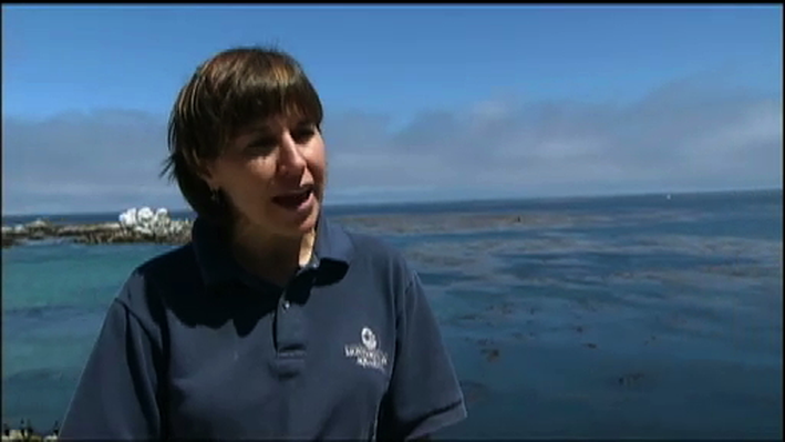 Scientist Profile: Marine Biologist