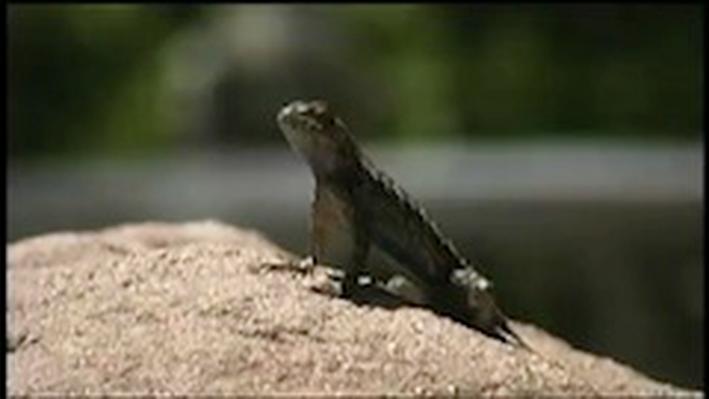 Lizard Habitat