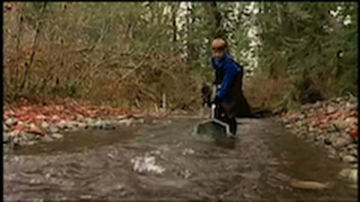 DragonflyTV | Salmon Run