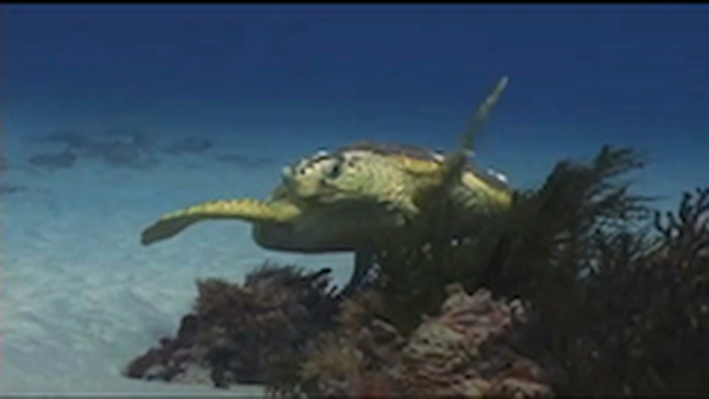 DragonflyTV | Turtle Research