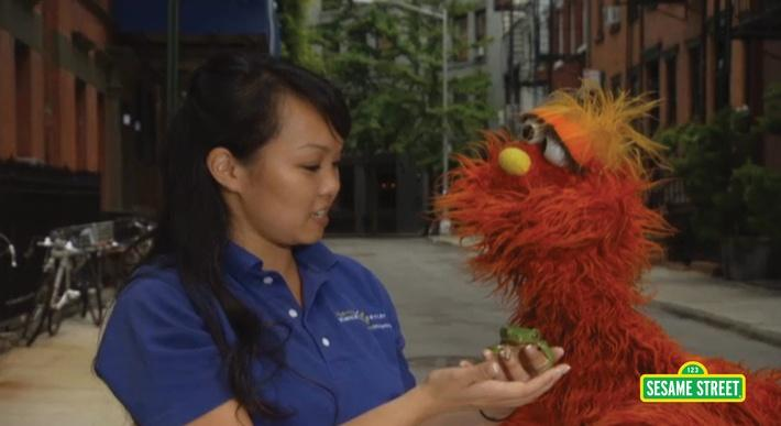 Word on the Street: Amphibian with Murray | Sesame Street
