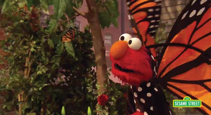 Song: Little Butterfly Friend | Sesame Street