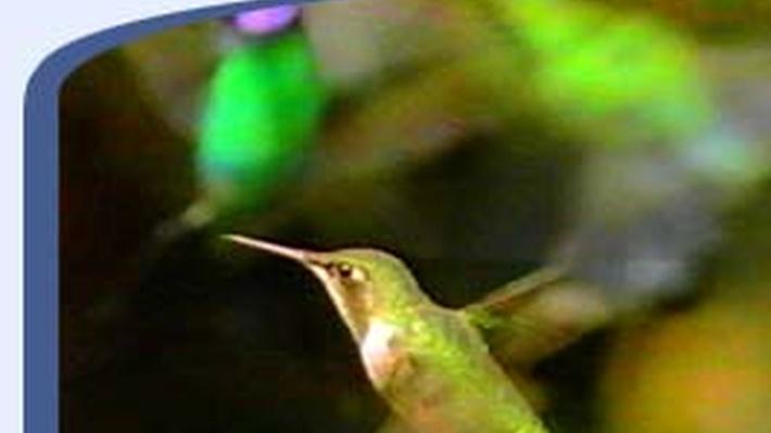 The Life of Birds: Champion Birds