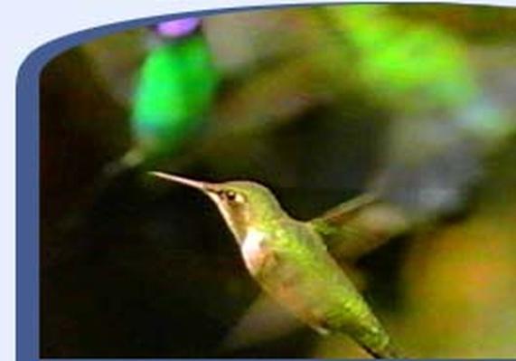 The Life of Birds: Bird Songs