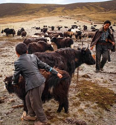 Requirements of Nomadic Life Continue | Global Oneness Project