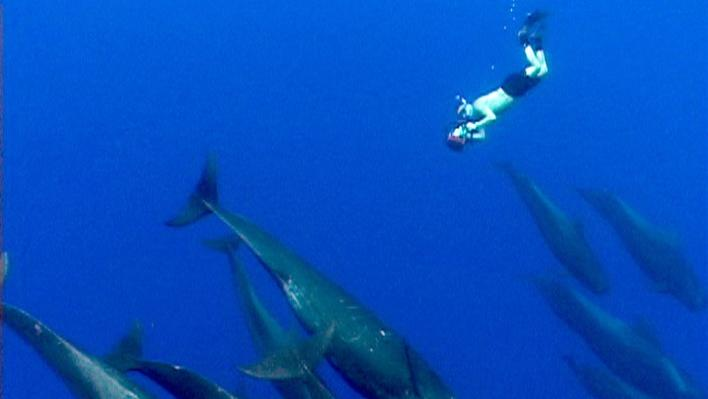 The Shark and the Whale