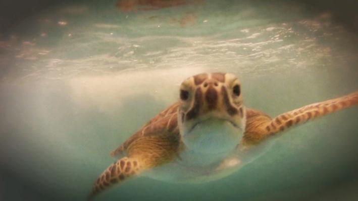 Georgia Sea Turtle Center | Fast Forward Launch Pad