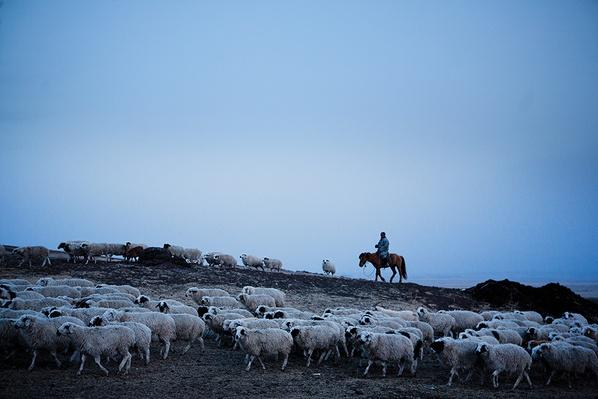 Mongolia is Sheep-Herding Country | Global Oneness Project