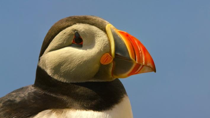 Seabirds in the Summer   Ireland's Wild Coast
