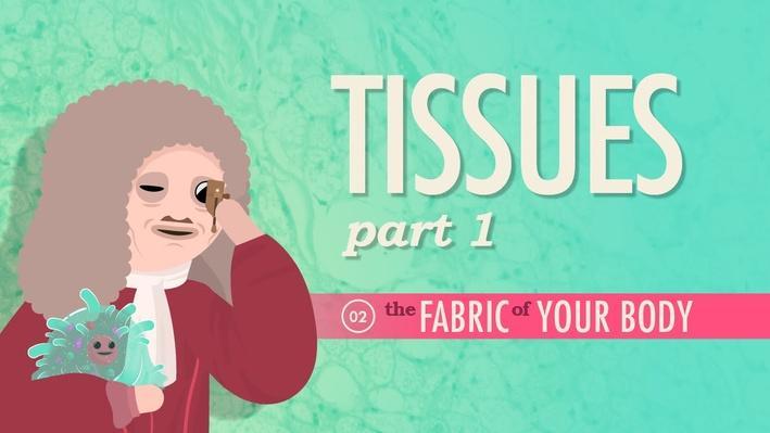 Tissues, Part 1 | Crash Course A&P 2