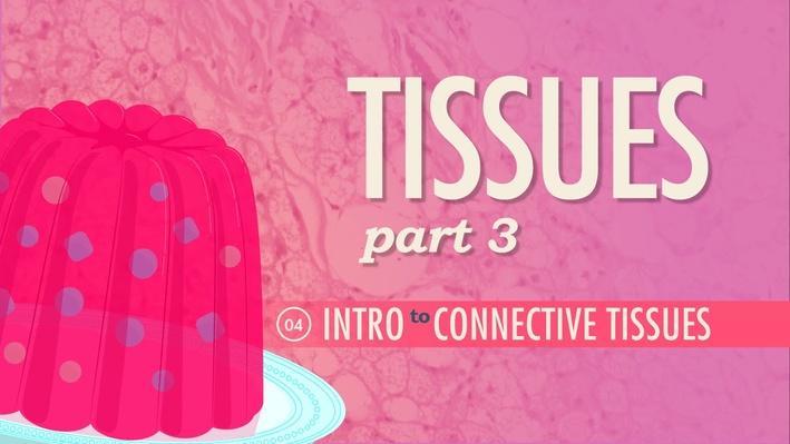Tissues, Part 3: Connective Tissues | Crash Course A&P 4