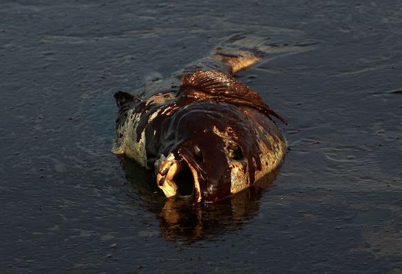 Gulf Oil Spill Damages Economies, Nature, and Way of Life | Earth's Resources
