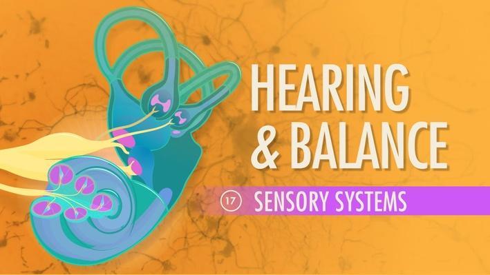 Hearing & Balance | Crash Course A&P 17