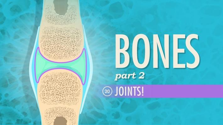 Joints | Crash Course A&P 20