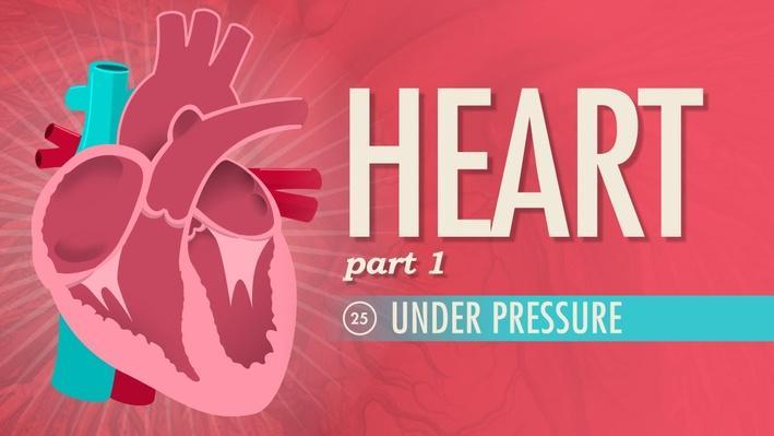 The Heart, Part 1: Under Pressure | Crash Course A&P 25