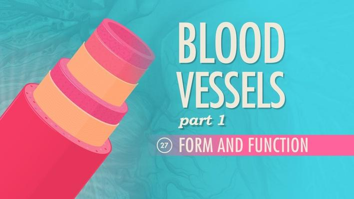Blood Vessels, Part 1: Form and Function | Crash Course A&P 27
