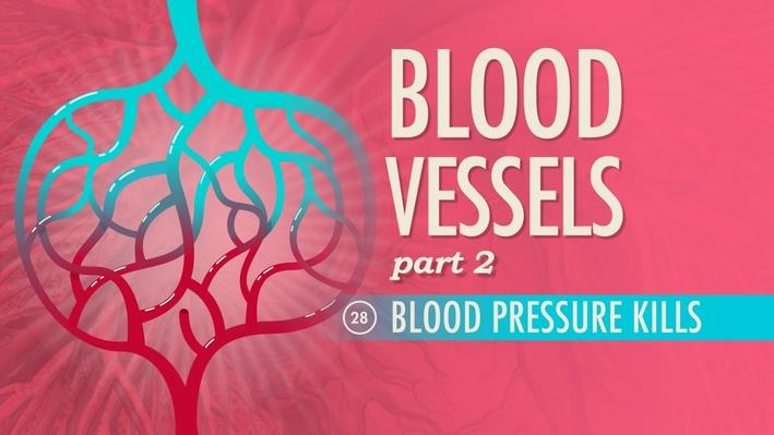 Blood Vessels, Part 2: Blood Pressure Kills | Crash Course A&P 28