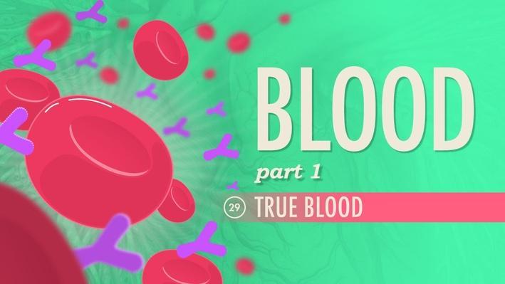 Blood, Part 1: True Blood | Crash Course A&P 29
