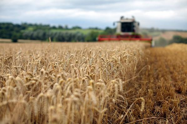 Global Grain Prices Set to Soar | Earth's Resources