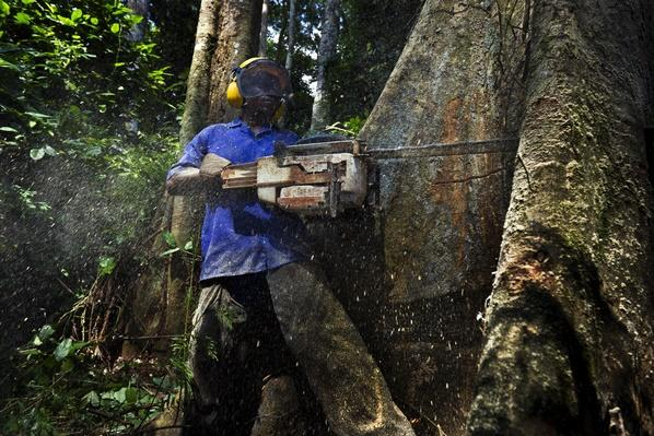 Cameroon Logging | Agriculture and Forestry