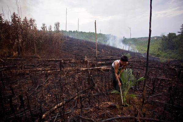 Deforestation In Sumatra Continues | Human Impact on the Physical Environment | Geography