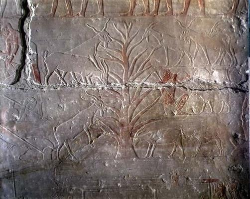 Goats eating a bush, relief from the Mastaba of Akhethotep at Saqqara, Old Kingdom