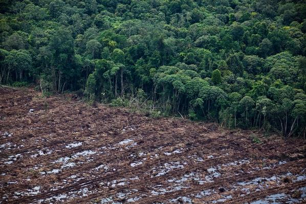 South Sumatra Governor Takes Aerial Tour Deforested Regions | Human Impact on the Physical Environment | Geography