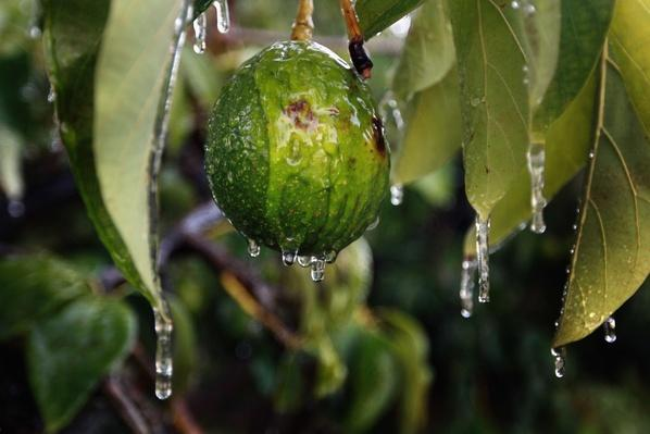 Early Cold Snap Hits South Florida | Earth's Resources