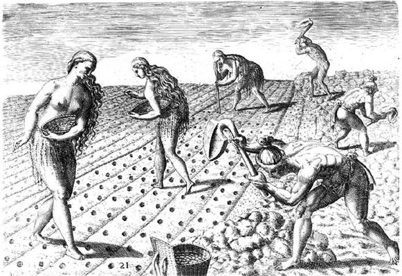 Florida Indians planting maize, from 'Grandes Voyages', 1591, written and engraved by Theodor de Bry