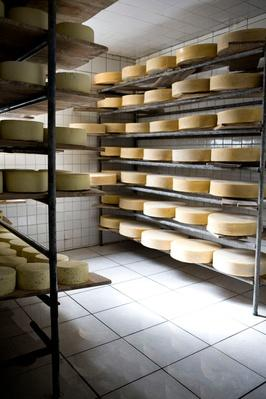 Fresh Cheese Ages | Earth's Resources