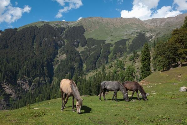 Horses, Kullu Valley, Himachal Pradesh, India | Earth's Resources