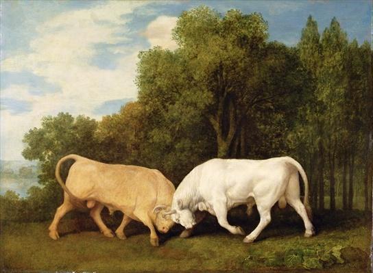 Bulls Fighting, 1786