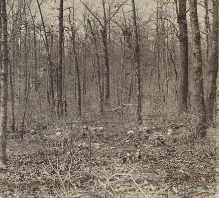Skulls and Bones of Unburied Soldiers, Plank Road, 1865 | Ken Burns: The Civil War