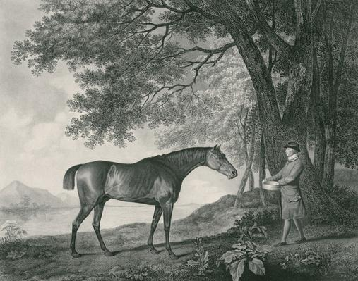 Sharke, engraved by George Townley Stubbs