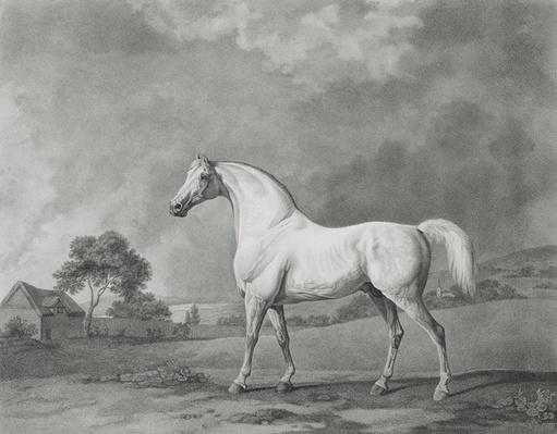 Mambrino, engraved by George Townley Stubbs