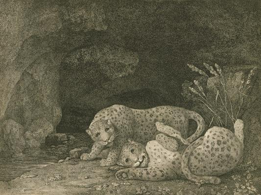 Tygers at Play, engraved by the artist, pub. 1789