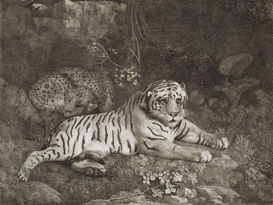 Two Tygers, engraved by the artist, pub. 1788