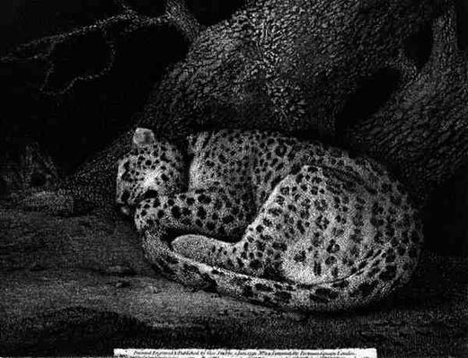 A Sleeping Leopard, engraved by the artist, pub. 1791