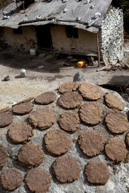 Drying Yak Dung, For Fuel - Nepal | Earth's Resources