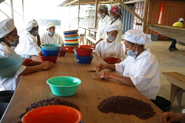 Workers Peel the Skins Away From Cocoa Beans | Earth's Resources