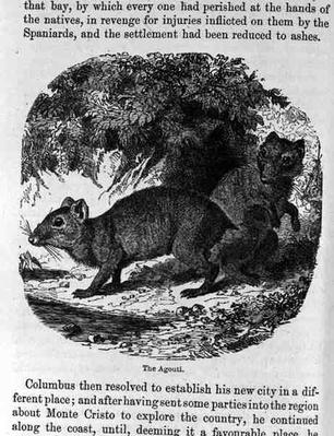 The Agouti, from 'Santo Domingo Past and Present' by Samuel Hazard, pub. 1873