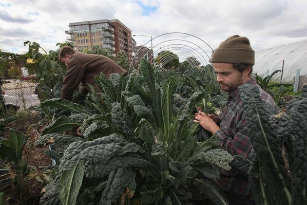 Urban Farm Thrives on Former Site of Notorious Housing Project | Agriculture and Forestry