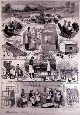 The Great Egg Question: Sketches at a Poultry Farm, from 'The Illustrated London News', 2nd April 1887
